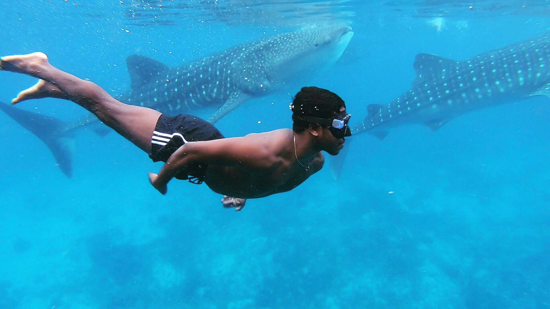 Kenny Svensson swimming with whale sharks.